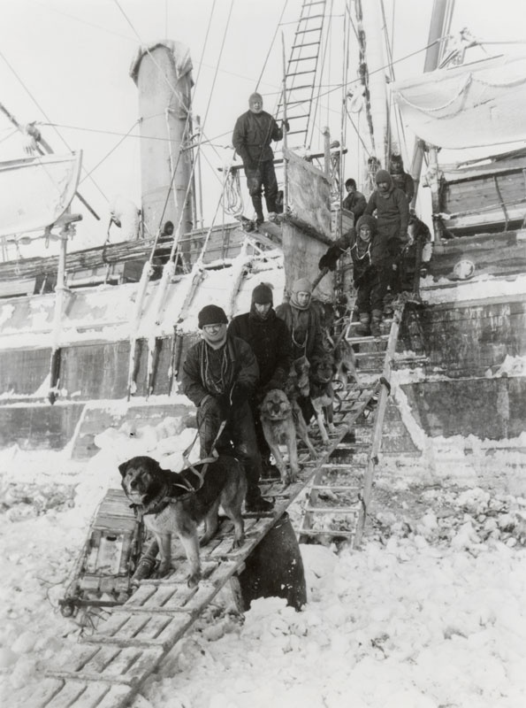 Taking the dogs out for exercise, Aug. 1915. Photograph of seven members of the party taking dogs down a gang plank from Endurance onto the ice. Sir Ernest Shackleton (1874-1922) stands on the side of the ship looking down.