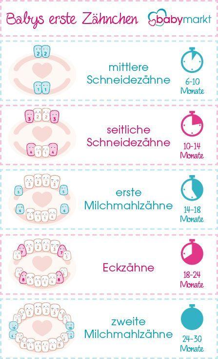Wann bekommen Babys Zähne? – babymarkt.de Führer   – Mama