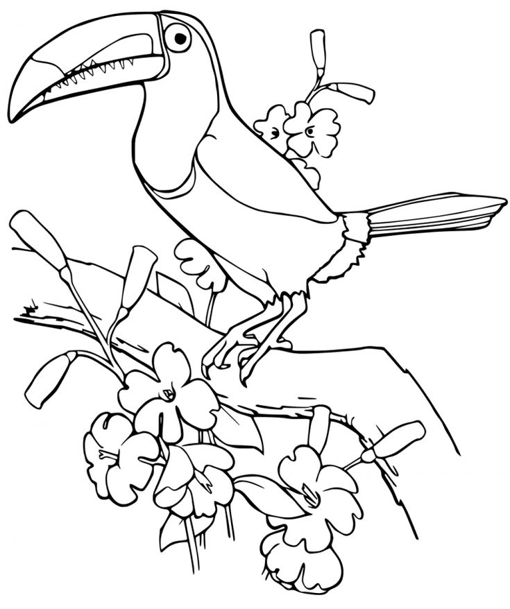 Toucan Coloring Pages - Best Coloring Pages For Kids in ...