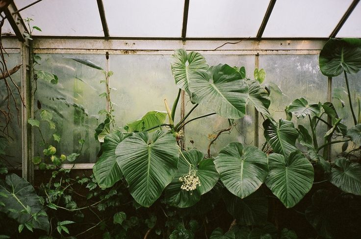 35mm by Molly Steele, 2013