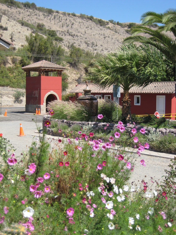 Pisquera Capel - Valle del Elqui - Chile Rico rico! Donde hacen pisco y cola de mono!