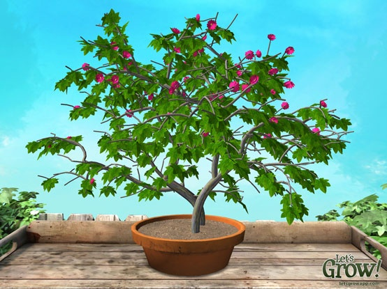'Eucalypso' - virtual plant created using the 'Let's Grow!' app for iPad. Love the almost white leaves and purple flowers. :-)   With the app you can create, grow and design your own unique virtual plants. More info at www.letsgrowapp.com  #virtual #plant #iPad #app
