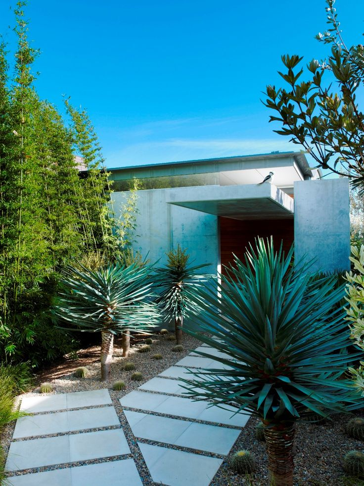 Front entrance with Dracaena draco and bamboo