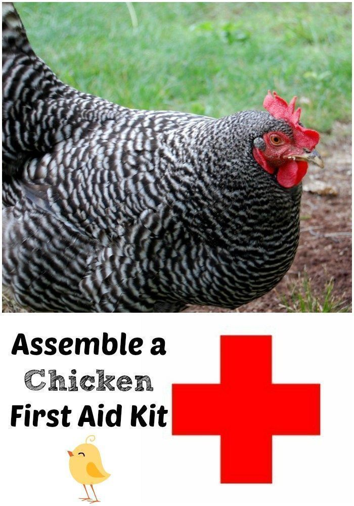 Assemble a chicken first aid kit now so you will be prepared for any emergency! #Ranges