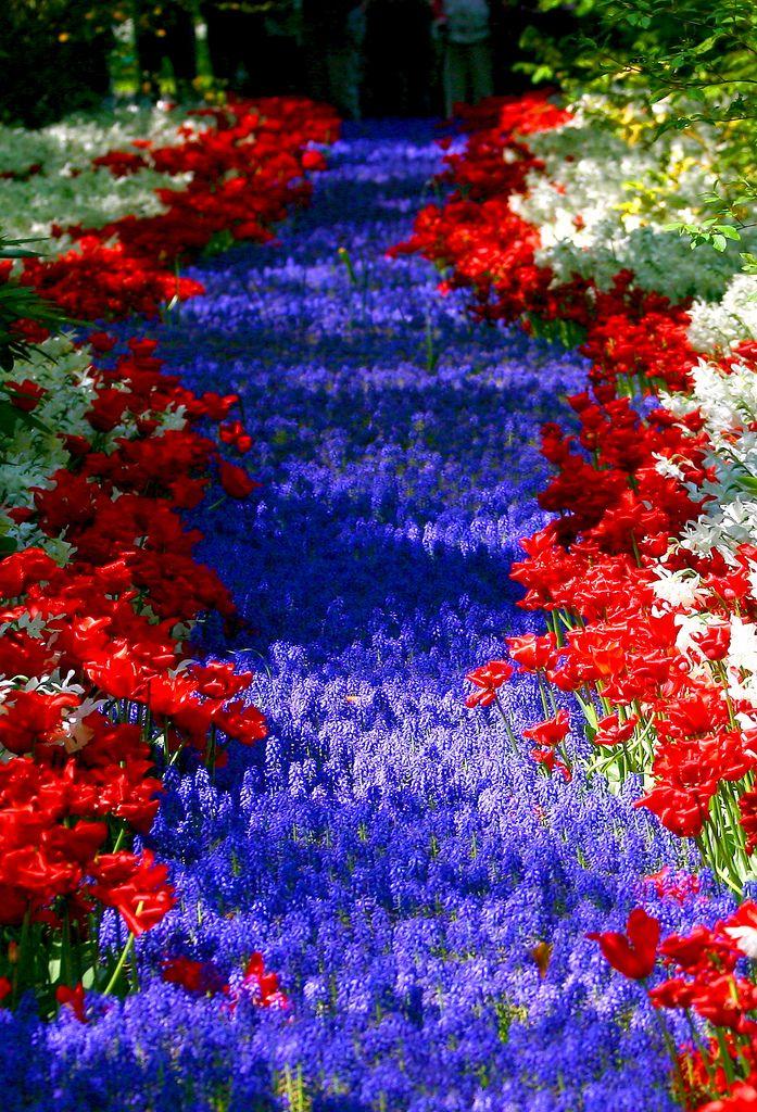 Flower Carpet, Keukenhof, Netherlands