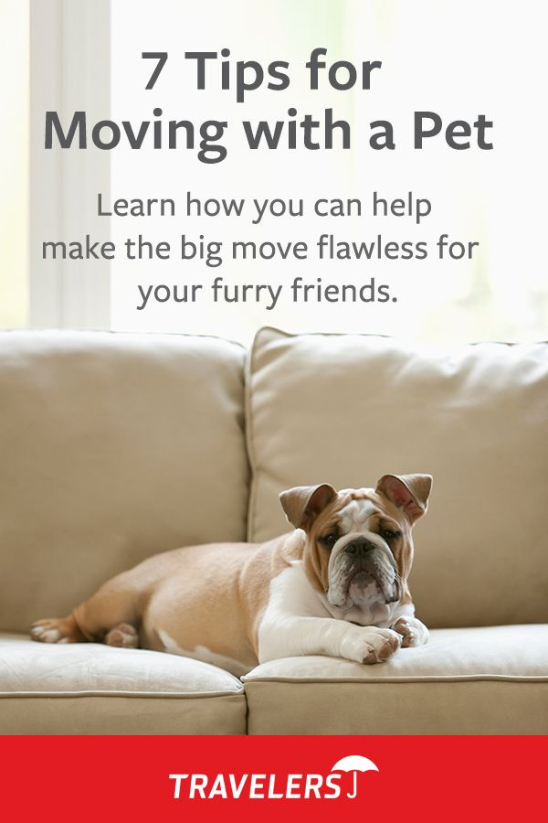 7 Tips For Moving With A Pet These Tips Can Help Make The Transition Easier On Your Pet Moving Tips Pets Moving