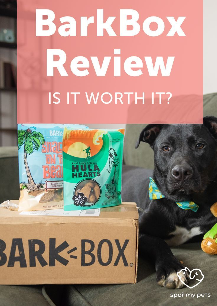 Barkbox Review 2019 Is It Worth Getting For Your Dog Barkbox
