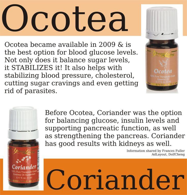 ocotea_coriander - OneDrive