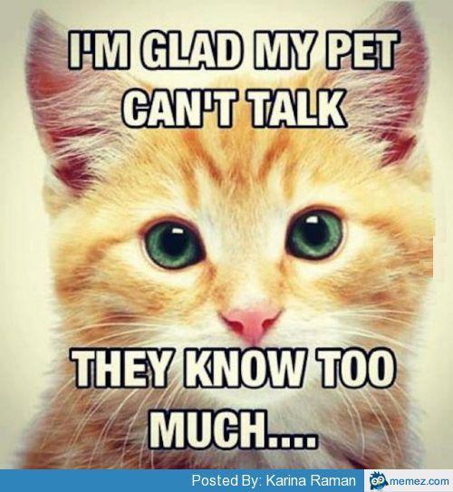 Glad pets don't talk