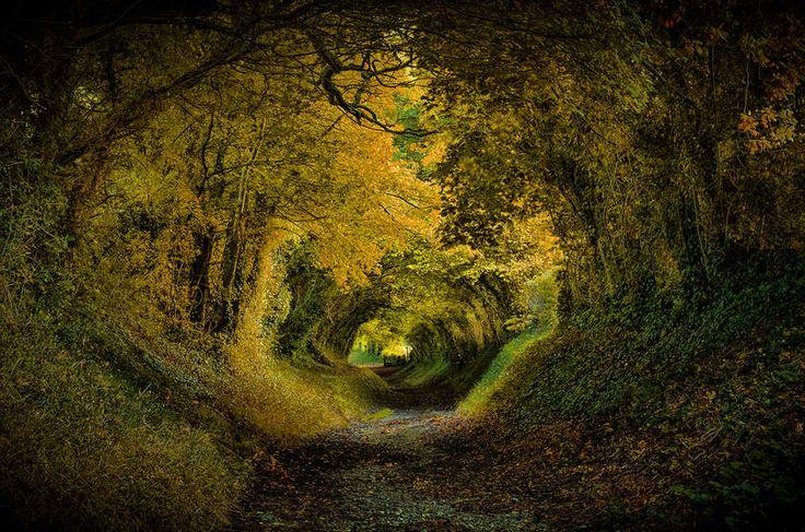 36 Florestas encantadas pelo mundo - Halnaker Tunnel, Inglaterra