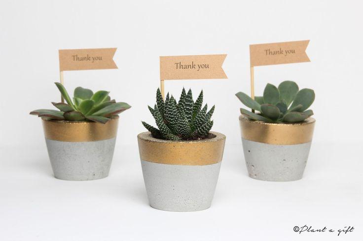 concrete pots gold wedding favors succulents bonbonniere