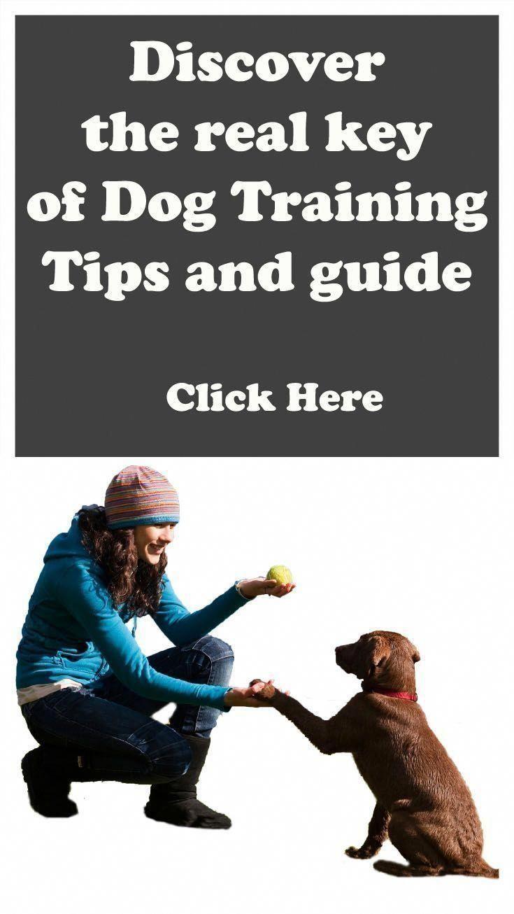 Playful Worked Dog Training For Agility Dog Dog Training Tips