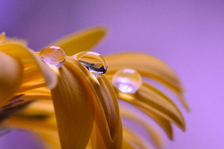 Three Drops by Yulius B Susilo