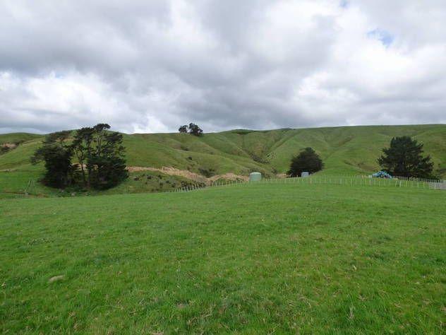 Kahuterawa Valley - Lacebark Drive