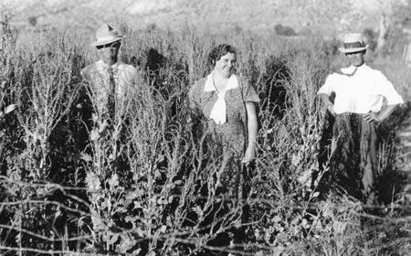 Sugar beet growers in their field.