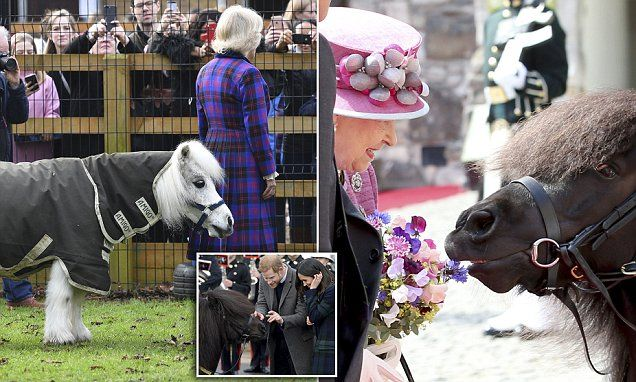 ICYMI: Prince Harry latest to have encounter with Shetland pony