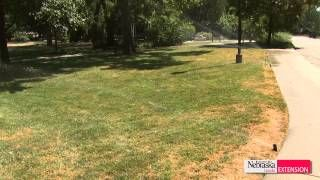Green and Growing Tip: Lawn Irrigation  --  UNL Extension Turfgrass Specialist Bill Kreuser talks about proper amounts of water for your lawn