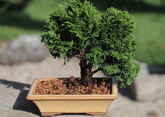 Choisir le pot de son bonsaï #bonsai #jardinage