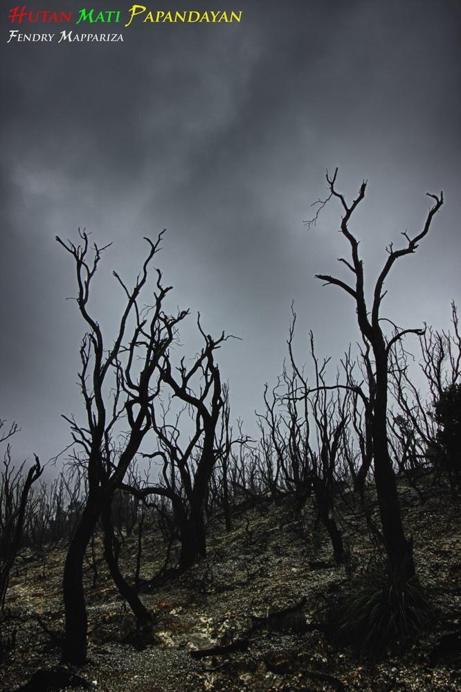 hutan mati gunung papandayan garut