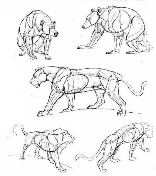 Les 25 meilleures id es de la cat gorie comment dessiner un lion sur pinterest dessiner un - Comment dessiner un lion ...