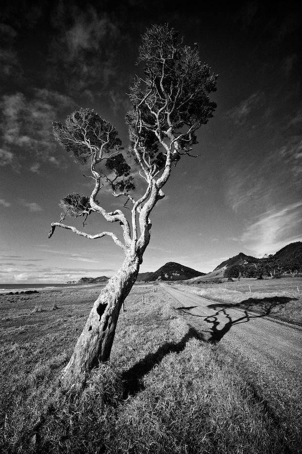 The Most Eastern Point of New Zealand, Along The Remote East Cape Road, East Cape, North Island, New Zealand