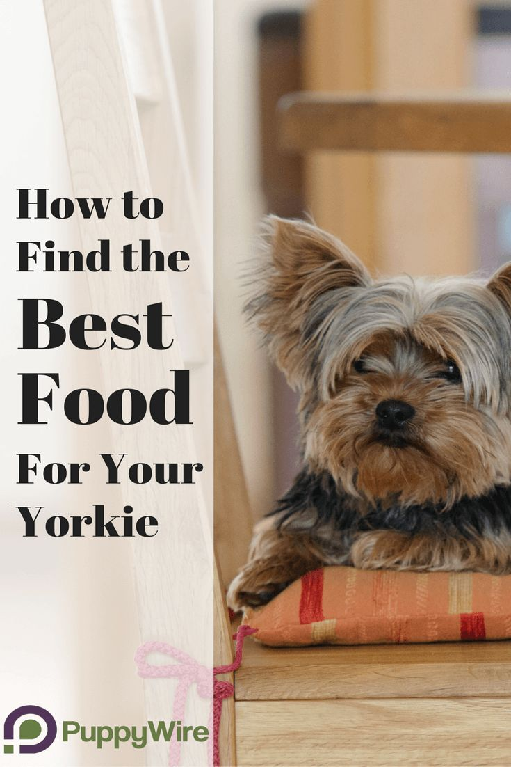 Best Dog Food For Yorkies 5 High Quality Food Choices Best Dog Food Dog Food Recipes Yorkie Puppy Care