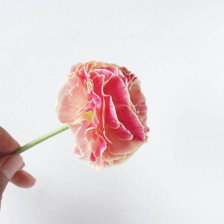 Es posible tanta delicadeza?  En un mundo que a veces parece (es? ) tan agresivo y revolucionado todos buscamos un puerto seguro. Yo lo encuentro en las cosas que para mi son verdaderas y entre otras  ahora lo es la belleza de las flores: incuestionable terapéutico  simbólico fugaz... fruto de la tierra (y cuando las he plantado y cuidado yo misma  como este precioso ranunculo son flores y al mismo tiempo emociones) . . . . . . . . . #enelbosque #enelbosqueflorece #flowers #flores #flower…