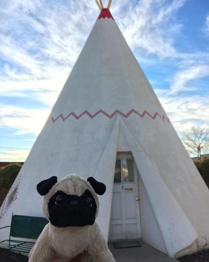 Mr. Pug stays the night at the Wigwam Motel in Holbrook, Arizona. 😴  #usa #arizona #holbrook #route66 #wigwam #teepee #motel #travel #mrpug #pugs #historic #roadtrip http://ift.tt/1JNKH81