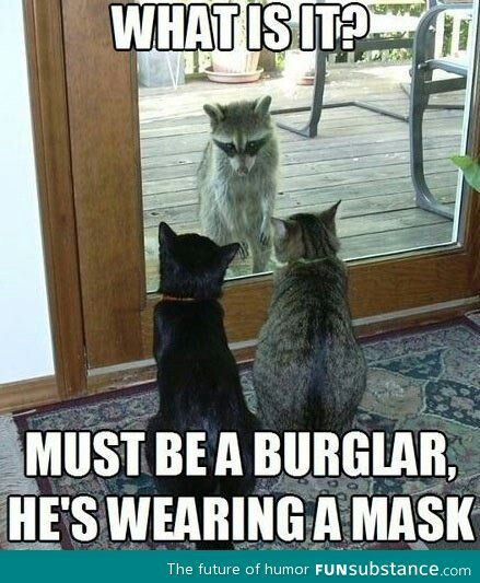 What is it? Must be a burglar he's wearing a mask. (2 cats sit watching a raccoon)