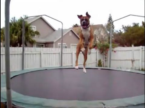 Top 10 Funny dogs on trampolines