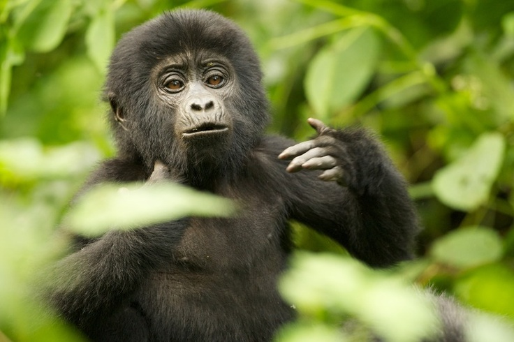 Safarious - Photo's of the day / Michael Lorentz / Gallery
