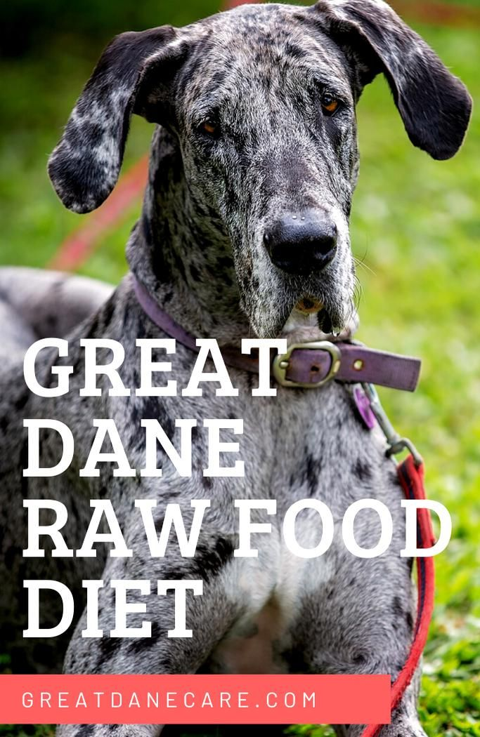 Follow These Simple Guidelines For Switching Your Great Dane Over To A Raw Food Diet It Also Includes A Sample Recipe To G In 2020 Great Dane Raw Food Recipes Raw Diet