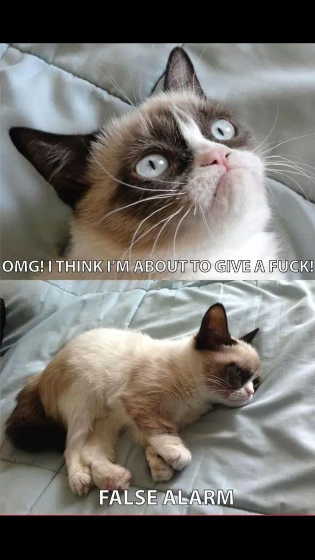 17 best images about grumpy cat on pinterest