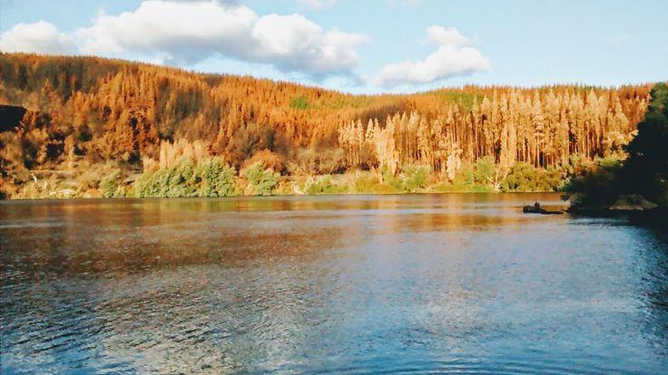 Incendios forestales , piedra del lobo, rio Maule, región del Maule