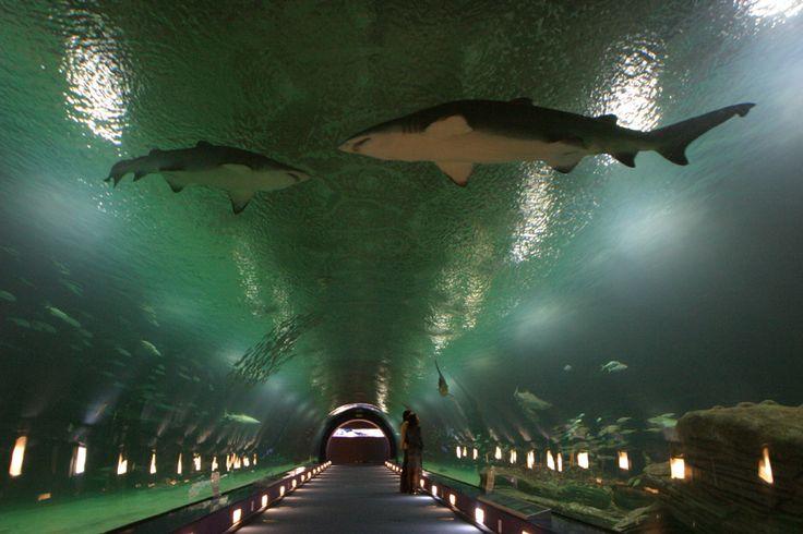 Oceanografic - Son acuarios que representan las diferentes vidas en los distintos mares del mundo.