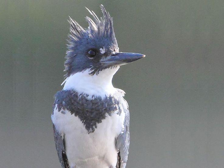 Daying Ering Memorial Wildlife Sanctuary in Arunachal Pradesh, India