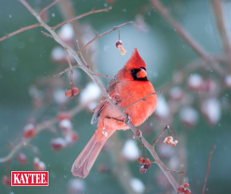 Create The Perfect Backyard Environment To Help You Attract More Birds With  Our Selection Of Wild Bird Feeders, Hummingbird Nectar, And Bird Seed.