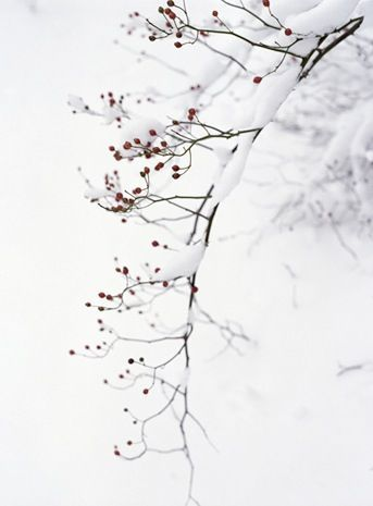 swansong-willows:  (via Pin by Magic Elf on Cottage: winter ☃ | Pinterest)