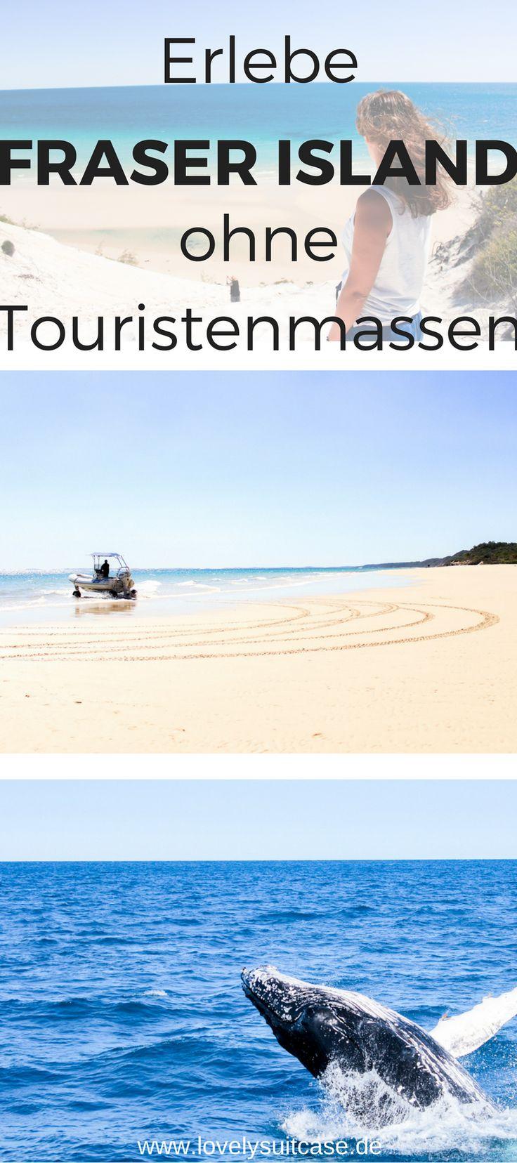 Du möchtest Fraser Island ohne Touristenmassen erleben? Das geht und ist mit diesem Geheimtipp ganz einfach. #australien #urlaub #reisen #whalewatching #fraserisland