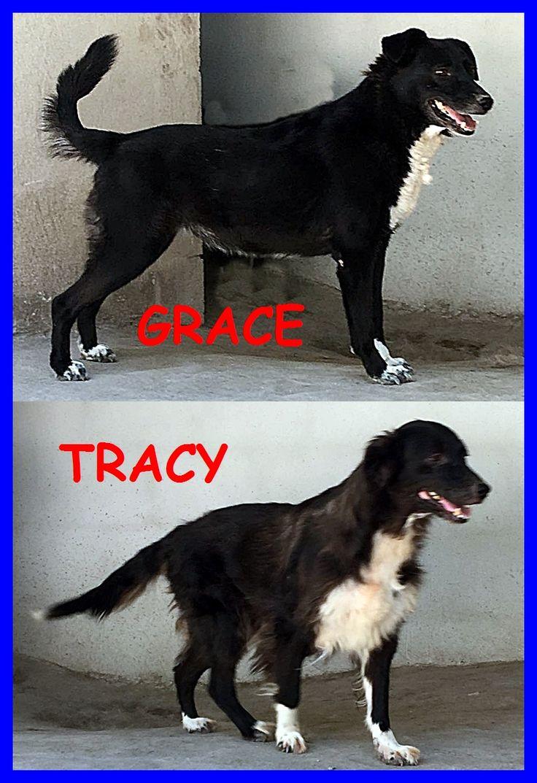GRACE E TRACY sorelle di 7 anni entrate in canile da cucciole - http://hormiga.it/grace-e-tracy-sorelle-di-7-anni-entrate-in-canile-da-cucciole/ Adoption, Adozioni Cani, Canili Gattili Rifugi, Troppi anni in canile, Volontari da aiutare
