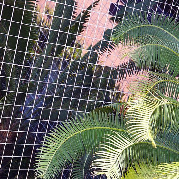 Tropical Decor, Photography, Florida, Palm Tree, Pastel, Molly O'Bryon-Welpott, MollysMuses