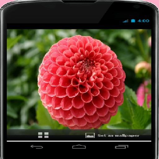 Amazon.com: Valentines Day Flower: Appstore for Android