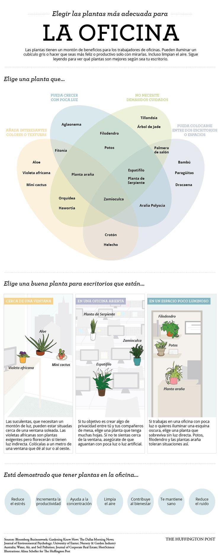 Decorar tu escritorio con plantas mejora tu productividad (INFOGRAFÍA)