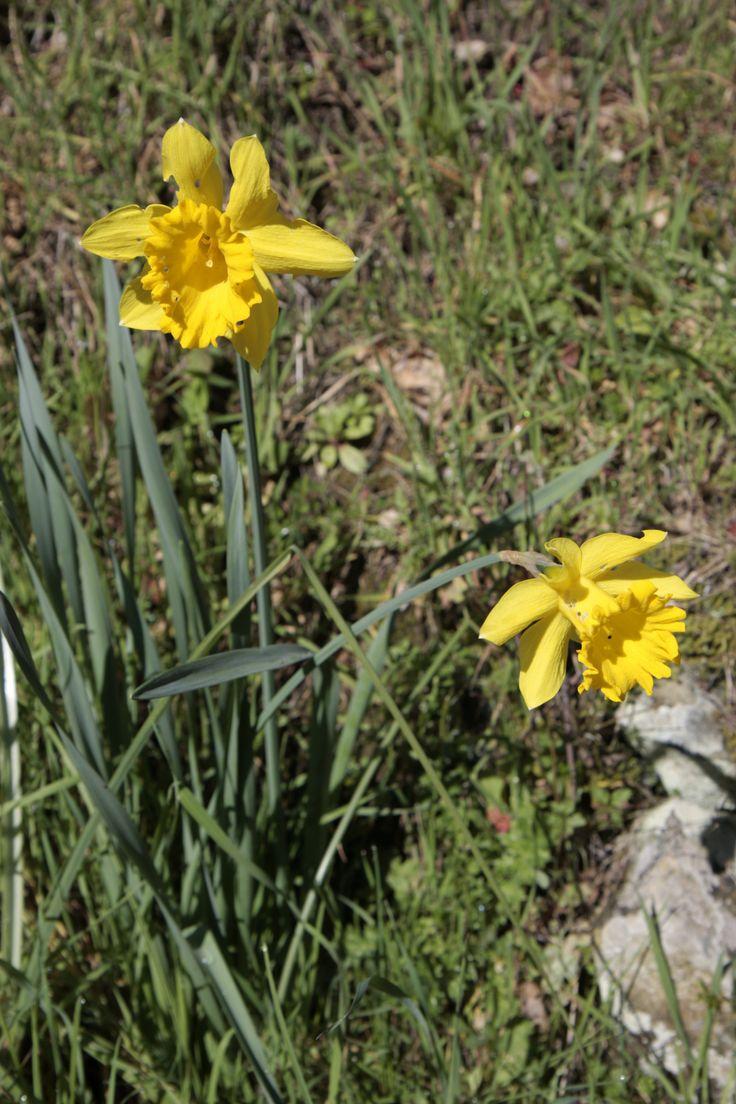 Start the spring at Cà de Carlicchi