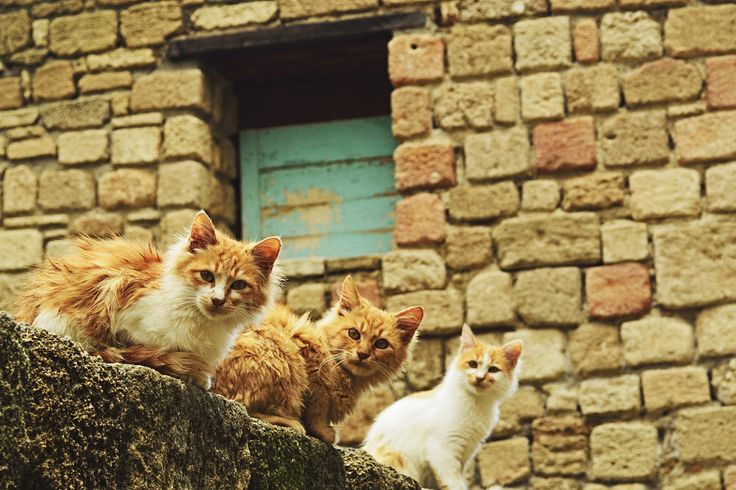 Portrait of stray cats, Rhodes City, Rhodes, Dodecanese, Aegean Sea, Greece, Europe by Radius Images on 500px