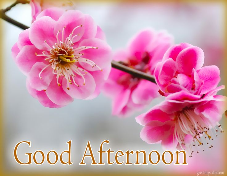 Good Afternoon - Free Images, GIFs & Greetings. #GoodDayWishes, #GreetingsPics http://greetings-day.com/good-afternoon-free-images-gifs-greetings.html