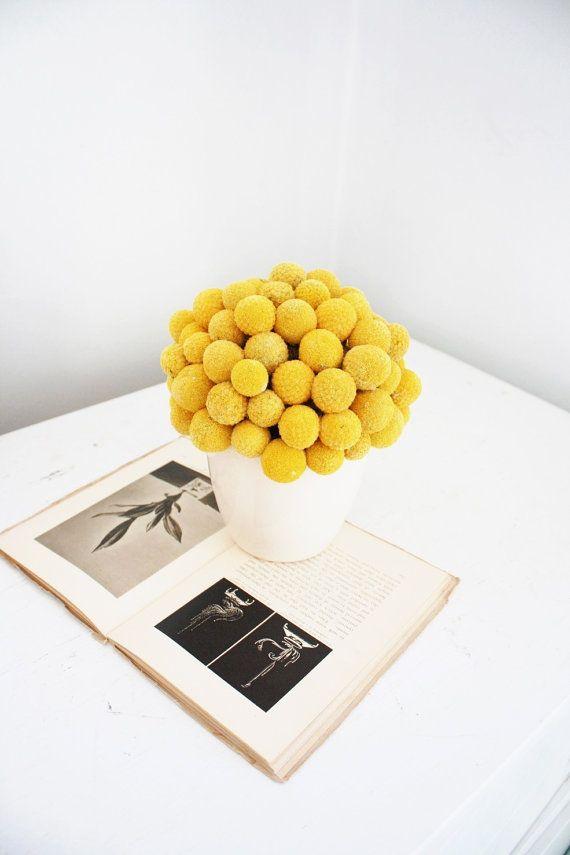 craspedia cluster- modern dried flower arrangement
