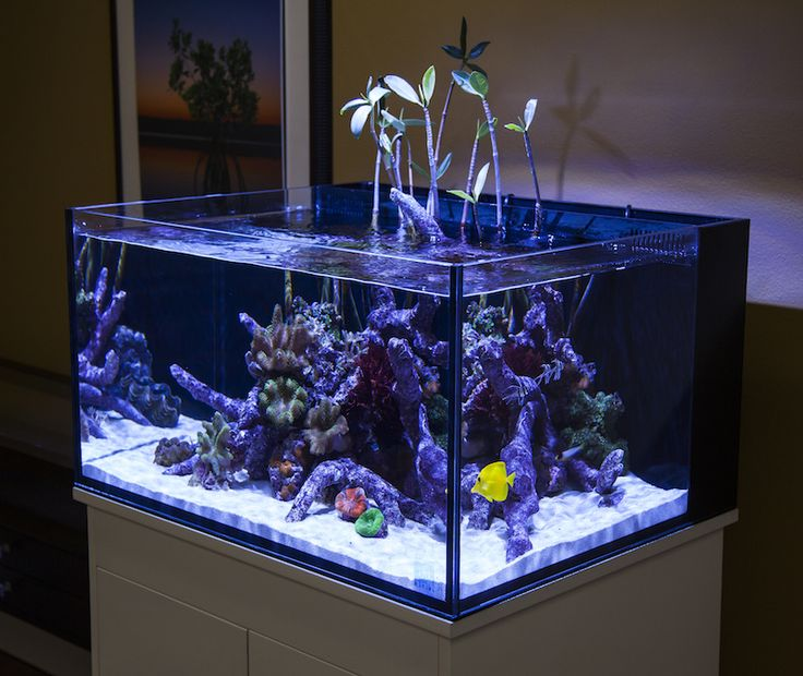 The shallow water dimensions of the Fusion Lagoons aquariums is conducive to creative, open top aquascapes