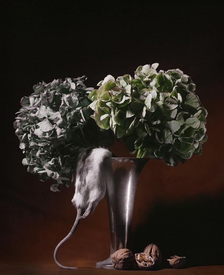 Roberto Greco - Rat and Hydrangeas