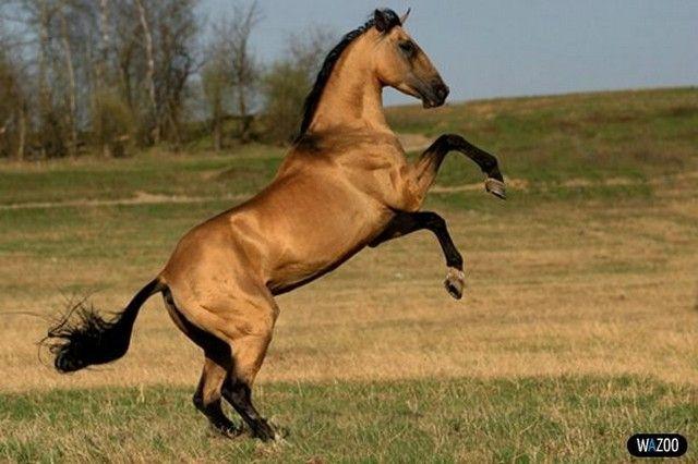индейские лошади - Поиск в Google